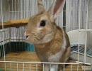 第25位:【やんちゃウサギ】お手・待てとか撮ってみた【ぴの】