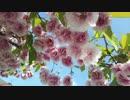 Spring Has Came & Mountain Climbing【Original Children's Song】