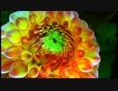 【ディズニー】人気のオルゴールメドレー2 【癒しの睡眠用・作業用】Music Box Medley2