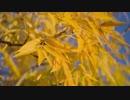 蓮尾としき Close Up of Yellow Tree