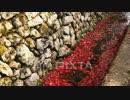 紅葉 庭園の自然 京都 圓光寺 瑞巌山 石垣 小川 by 足利達矢