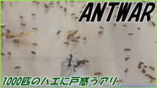 1000匹のハエが住む楽園にアリが侵入するとこうやって駆逐される。