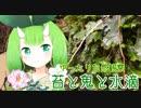 【ゆったり自然観察】苔と鬼と水滴【Vtuber妖怪 木守日あぐり】