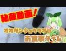 オオサンショウウオの赤ちゃんの貴重な食事シーン【Vtuber妖怪 木守日あぐり】