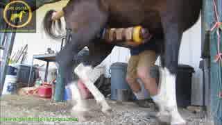 馬の射精⑤