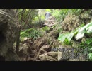 第41位:【RTA】沖縄嘉津宇岳攻略【失敗あり・自転車車載】 thumbnail