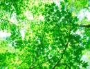 【作業用BGM】パッヘルベル:カノン (1時間リピート)
