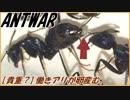 第63位:【朗報】女王アリがいないアリの巣では働きアリが卵を産む!