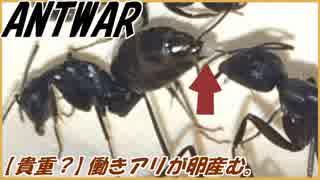 【朗報】女王アリがいないアリの巣では働きアリが卵を産む!