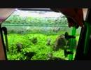 【アクアリウム】0からミスト式で30cm水草水槽を立ち上げる。#4