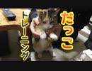 野良猫ミケちゃんの抱っこトレーニング!?