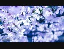 【重音テト】桜の花【オリジナル】