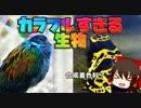 第66位:合成着色料?カラフルすぎる変な生き物14選【ゆっくり解説】 thumbnail