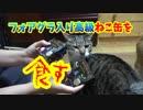 人間よりも先に猫がフォアグラを食べます。だって下僕だもの。