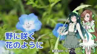 【VOCALOID・CeVIOカバー】野に咲く花のように(ダ・カーポ)【緑咲香澄・東北ずん子】