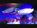 新江ノ島水族館 スマートなイカの泳ぎを見よう!