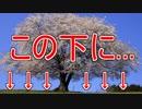 【終】花見の時期だから桜の木の下掘り返す【怪談小噺・蒐】 #7