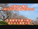 京都 背割提さくらまつり2019(2019.4.5)