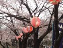 花見会場ビンゴ【ボツ】