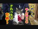 猫をお膝に乗っけてお腹をモフモフする動画