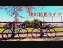 【第一回自転車動画祭】境川お花見サイクリング【ロードバイク車載】