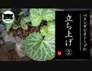 【ベランダビオトープR1】立ち上げ② 植栽・注水