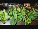 2019年3月13日:自然農法の菜花は苦くない!肥料と食味の関係【旬の野菜紹介】