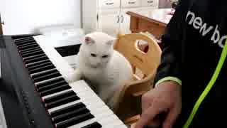 猫先生の厳しすぎるピアノレッスン