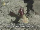 【ニコニコ動画】ゴキブリの秘密-3を解析してみた
