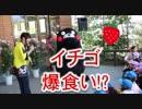 くまモン、イチゴをたくさん食べた子供に絶句!!はな阿蘇美グランドオープン式典!!