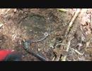 (山歩き回)(ゆかマキ解説)変態忍者の、狩猟&有害鳥獣駆除従事活動記・その69