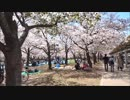 大阪城南堀の桜並木を歩く