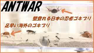 日本と海外ゴキブリ、同じエサ場に混ぜたらどっちが先にアリのエサになる?【前編】