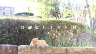 Miku&cat nap - お邪魔します天国