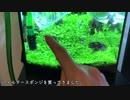 【アクアリウム】ついに!お魚ちゃんを入れます!#7