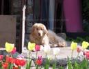 TTMP original music & image movie【 Spring flowers blooming 】