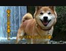 第83位:【柴犬ジロー】柴犬と田舎暮らし2【Shiba Inu】 thumbnail