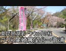 【車載動画】奥琵琶パークウェイの桜 つつら尾崎展望台→菅浦