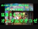 横浜みなとみらい 横浜中華街 猛毒をもったオニダルマオコゼ