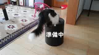 もぐらたたきができる猫