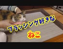 野良猫ミケちゃんをブラッシングする!
