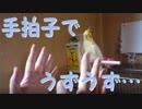 第60位:手拍子で、うずうずしちゃう お爺ちゃんインコ thumbnail