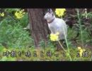 時報がなると帰る猫~~ネコも木から降りる