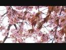 VTRといっしょに、春探し【鳴神】
