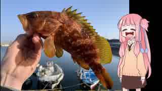 ○○で釣りをしよう! ~第一回島根県浜田市~