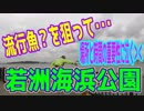 釣り動画ロマンを求めて 259釣目(若洲海浜公園)