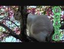 桃の花とマドゥ