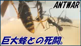 巨大蜂との死闘!~弔いのレクイエム~