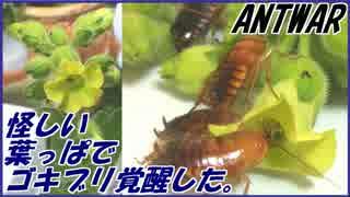 怪しい葉っぱを栽培してゴキブリに与えたら異常なほど覚醒した。