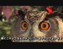 フクロウカフェに行ってみた【フクロウの森】(京都/嵐山)